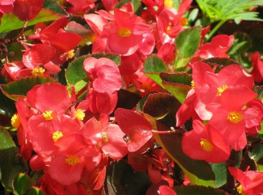 一年四季都盛开的花是什么花?这些花你是不是一年四季都见过呢?