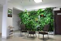 11款能爬满墙壁的室内绿植