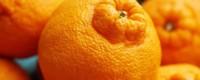 丑橘为什么叫丑橘,适合在什么地方栽