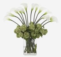 盆栽百合花休眠图片