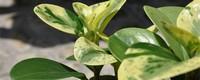 养花怎样防治病虫害