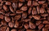 葡萄籽的功效与作用及食用方法,坚持吃葡萄籽10年了