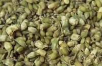 槐米茶的功效与作用及食用方法