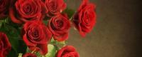 玫瑰的种子在哪里,种植方法是怎样的?