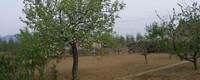 果树施肥方法