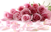 好看的玫瑰花桌面壁纸