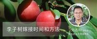 李子树嫁接时间和方法