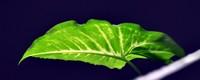 绿萝几天浇一次水,浇什么水长得快