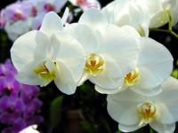 最香的花:兰花√植物之最√植物百科