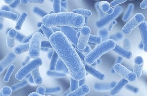 益生菌可以长期吃吗,吃益生菌的最佳时间
