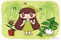 绿萝吊兰…竟然有30个品种!而你只见