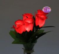 彩色唯美图片玫瑰花