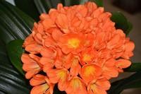 吊兰绿萝…花卉冬季死亡原因,不看就