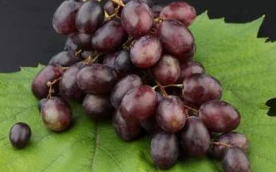 葡萄皮的功效与作用及食用方法