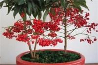 黄金万两植物客厅风水,单盆摆放财神位可旺财
