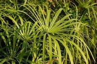 竹子的种类有哪些