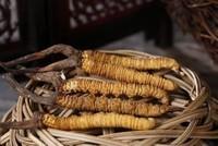 哪些人不适合吃虫草,三类人不能吃冬虫夏草
