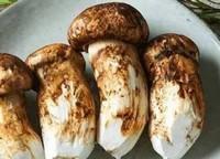 松茸可以人工种植吗,松茸的营养价值