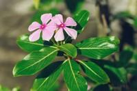 有哪些耐热的花卉 盘点10种耐热又好养的花卉
