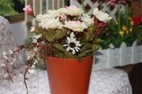 玫瑰花什么时候开,花期在5~6月