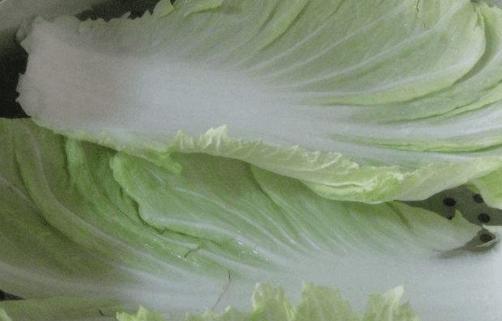 白菜图片大全!白菜高清图片!