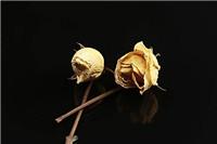 鲜玫瑰花怎么做成干花