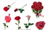 一支带刺玫瑰花图片
