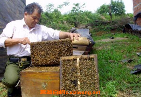 如何诱野蜜蜂 诱野生蜜蜂的最好绝招