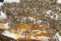 蜜蜂糖的功效与作用 蜜蜂糖什么时候吃最好