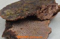 野生蜂窝的功效与作用