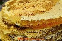 岩蜂蜜的作用与功效 岩蜂蜜是怎样形成的