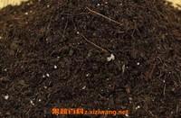 花土怎么配 最简单的多肉植物配土方法