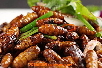 蚕蛹的功效与作用有哪些 吃蚕蛹的好处