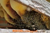 土蜂巢有什么作用 土蜂巢的功效与作用