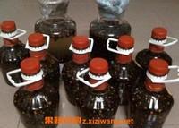 黄蜂泡酒的功效与作用 黄蜂泡酒有什么功效