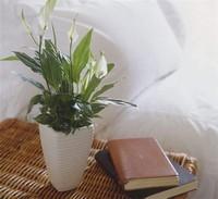 卧室植物摆放风水禁忌