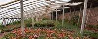 温室为什么不能养花