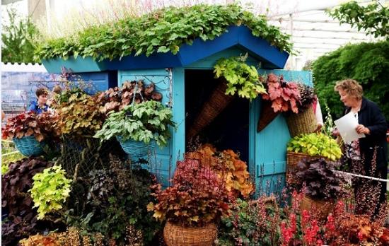 矾根盆栽如何养护:浇水技巧和通风很