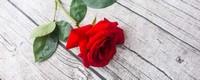 1朵玫瑰花代表的含义