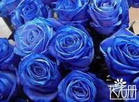 10朵蓝色妖姬代表什么意思,十全十美与天长地久