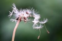 植物怎么传播自己的种子