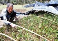 红豆杉用什么肥料好,富含氮磷钾的复合肥或有机肥