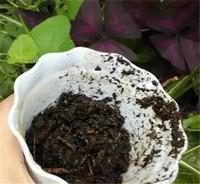 铜钱草怎么养,遮荫保水见光注意施肥