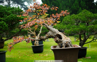 绿色鲜花盆景图片