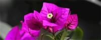 花期长好看又好养的花