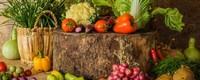 蔬菜有哪些种类