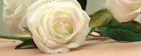白玫瑰红玫瑰代表什么