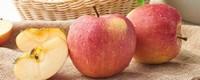 苹果什么季节成熟