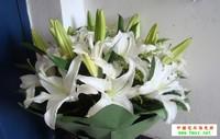 盆栽食用百合花图片
