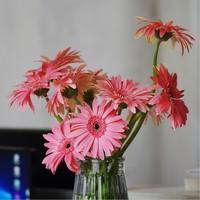 非洲菊插花图片